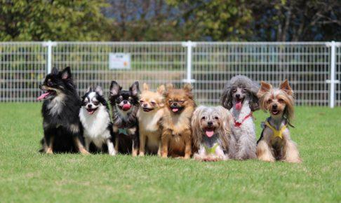 知ってる?犬の種類と性格の違い