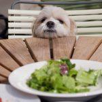 ご飯は上げてるのに、、犬がつまみ食いするしつけ対策
