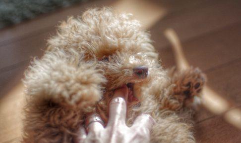 知ってる?犬が甘噛みする理由と原因