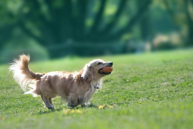 犬に芸のしつけ方まとめ!「お手」「おすわり」「おいで」をマスターするには