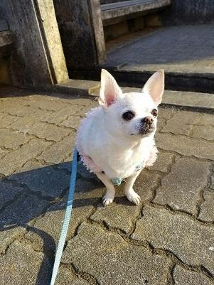 犬のリーダーウォークの利点は飼い主だけのものではなかった