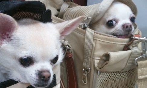犬にもしつけ教室があるのを知ってましたか?しつけ教室では何ができるのか