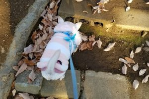 犬のリーダーウォークってなに?正しい散歩の仕方