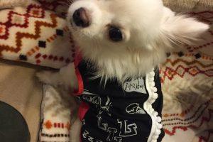 愛犬にふさわしいお洒落でかわいい服に着替えませんか