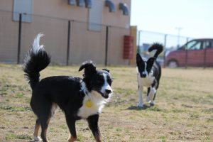 犬を飼う初心者が知るべき5つのポイント