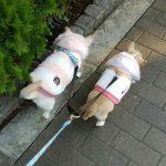 便利な犬の散歩グッズのおすすめランキング!