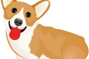 犬の食事に上手く薬を混ぜて飲ませる3つのコツ