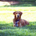 犬の健康管理にサプリメンは必要?体調の変化に注意して!