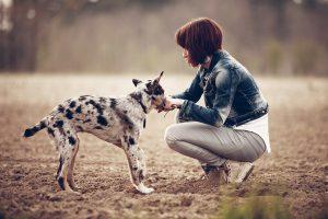犬のしつけに褒めるは重要!上手な褒め方3つの方法