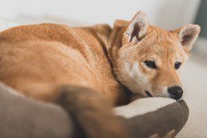 【注目】ペット保険の加入賛否。どっちがいいの?私の実体験から得たもの