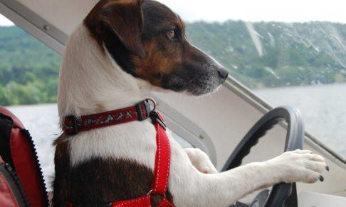 ペットと楽しい旅行 心構え編 ペットファーストで考えよう。