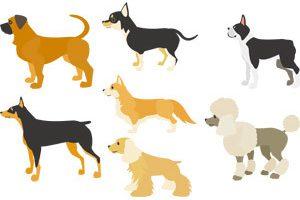 【最新版】犬の名前ランキングベスト7