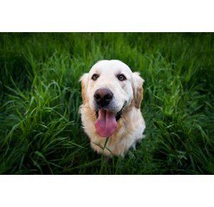 犬の口臭対策におすすめグッズ5選!