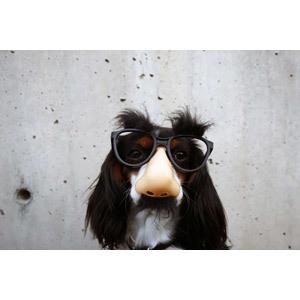 犬の特徴。断耳、断尾とは
