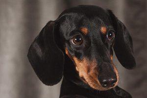 初めてのペット!犬を飼うのに知るべきポイント
