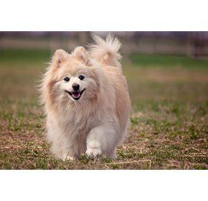 犬のトリミング頻度はどれぐらい?いいトリマーさんの選び方