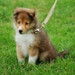 愛犬と一緒に旅行したいよ!準備と宿泊マナーを勉強しましょうね。