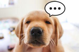 犬のしつけで一番いいり方・怒り方を知ってますか?