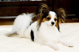 犬の保険どれがおすすめ?人気のペット保険ランキングベスト3