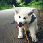 飼い犬が生ゴミをあさってしまうのは何故なのか?