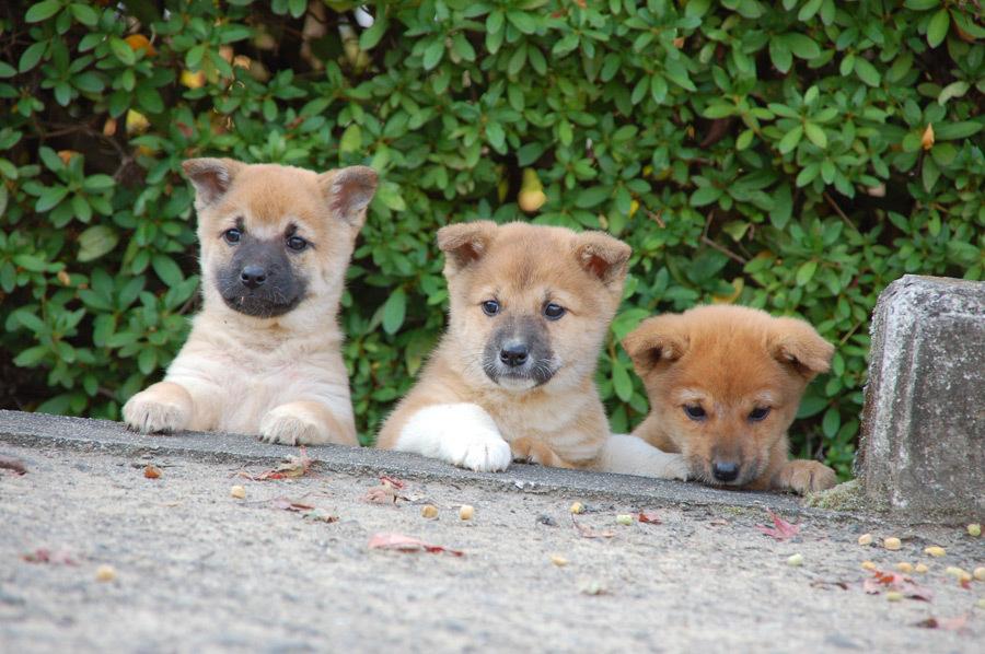 初心者が最初にやるべき子犬へのしつけ!3つだけまずはしてね。