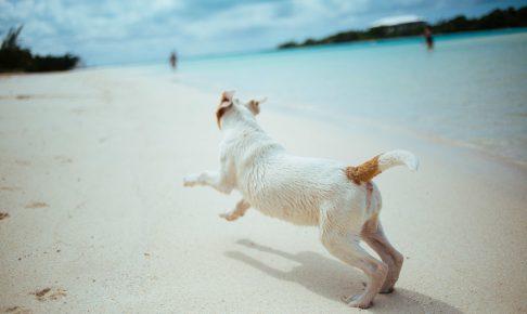 犬の欲求には、どんなものがあるの?本能って?