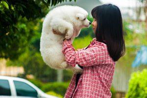 犬が抱っこを嫌がる理由を知ってますか?犬を抱っこしたい人が知るべき3つのこと