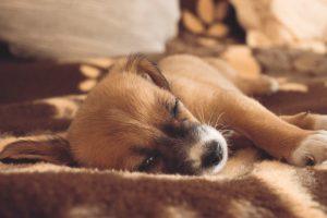 犬の留守番は何時間まで大丈夫なの?