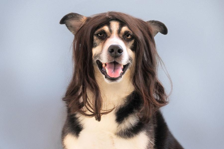 犬のトリミングを頼みたいけどどんなお店がいいのだろう?