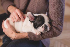 初めての子犬の飼い方で注意する点を教えてください!これは守ってね。