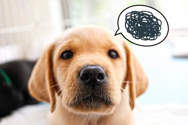 犬のしつけスプレーは効果があるの?その実態とおすすめ商品