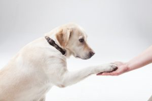 犬のしつけはどうするの?