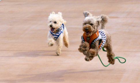 急な犬の飛びつき癖を直したい!成功するしつけ3つのコツ