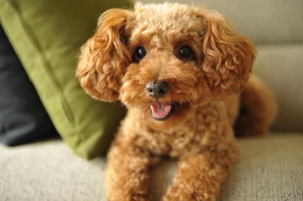 犬の内部寄生虫って、どんな種類があるの?
