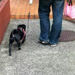散歩で便利な犬のフン処理グッズ!まとめてみました!