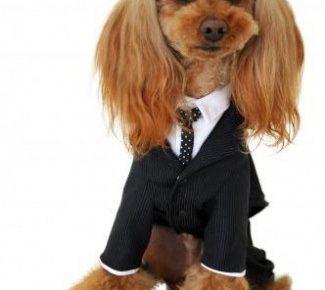 仙台でおしゃれな犬グッズが買える店特集!BUTCH DOGさんを紹介!