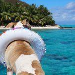 犬と海に行きたい!おすすめペットグッズってありますか?