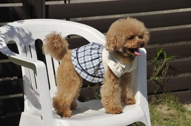 なんばでおしゃれな犬グッズが買えるお店!「Momo to Nana」を紹介!なんばでおしゃれな犬グッズが買えるお店!「Momo to Nana」を紹介!