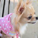 犬のしつけスプレーの作り方と使い方