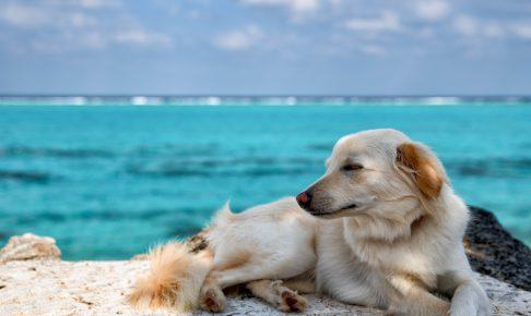 お手を犬にしつけるときのポイント♪簡単にできる犬のしつけ方をご紹介!