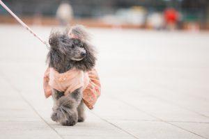 京都に住んでる飼い主さん必見!京都の犬のしつけ教室のおすすめ