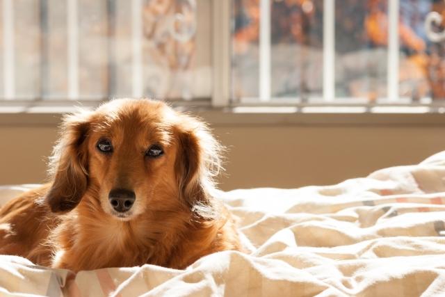 犬のしつけをわかりやすく動画で解説!使える動画まとめ