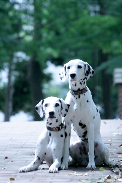 犬のしつけを気軽に相談♪しつけを教えてくれる無料の相談サービスをご紹介