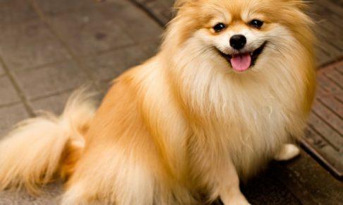 自宅で愛犬のしつけをしてくれる出張ドッグトレーナーとは??