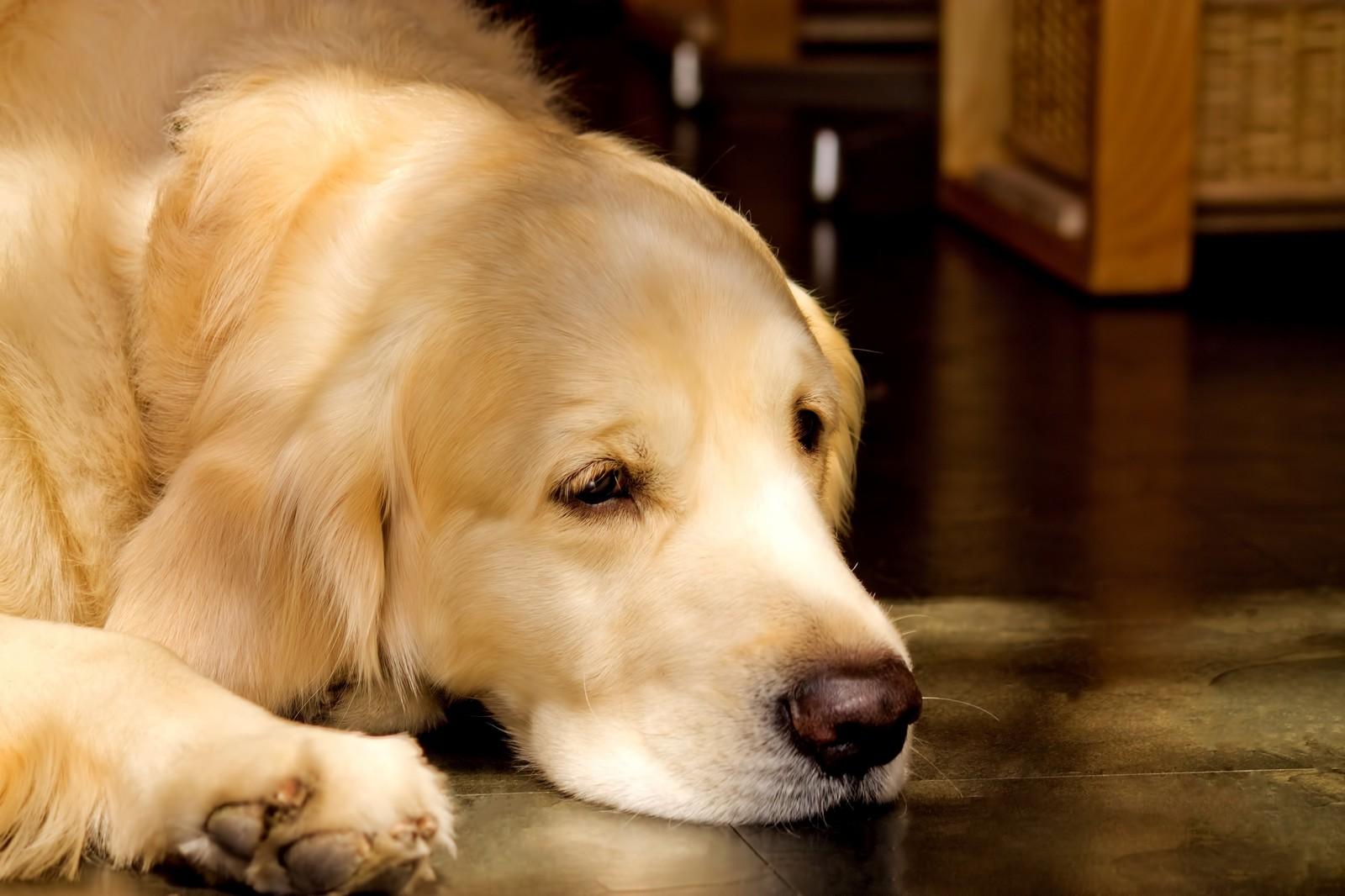 「ふせ!」愛犬にふせをしつけるときの、簡単なポイントをご紹介♪