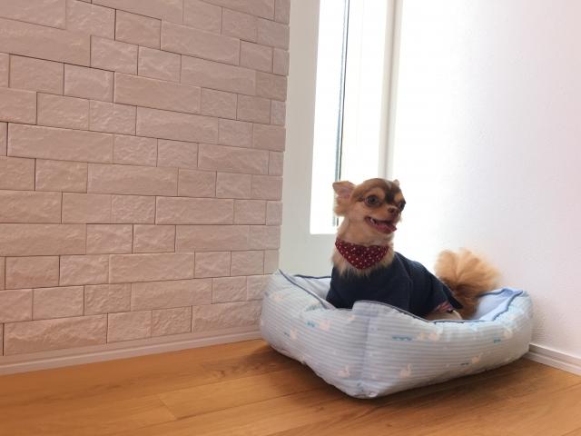 犬のトイレのしつけは最初が肝心!そのしつけ方法とは?