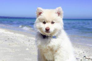 犬のハウスのしつけをはじめるなら!ハウスの意味、種類、しつけ方をご紹介!