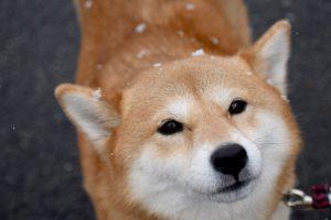子犬はもちろん、成犬のしつけの基本!しつけの方法やお役立ちグッズをご紹介!!