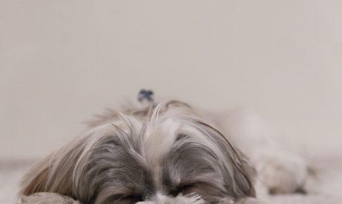 子犬のしつけを始めよう!しつけの方法と役立つグッズのご紹介