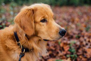 犬のしつけ用の首輪があるって知ってる?方法は?おすすめの首輪は?危険じゃないの?!
